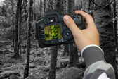 Photographer photographing old forest — Stock Photo