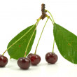 Stock Photo: Red cherries
