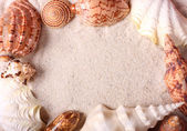 Seashells frame — Stock Photo