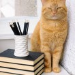 Big red cat on a white table — Stock Photo
