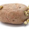 Germinating potato - Foto Stock