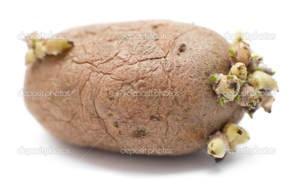 A germinating potato against white background, macro — Stock Photo #3378540