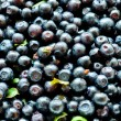 Blueberry background — Stock Photo #3760682