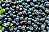 Blueberry background — Stockfoto