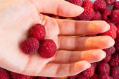 Raspberry background — Stockfoto