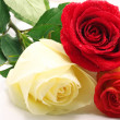 Stock Photo: Three roses