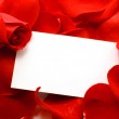 Rose and message on a petals. Background — Stock Photo #5082051