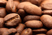 Coffee Graines — Foto de Stock