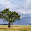 Old Tree Landscape — Stock Photo