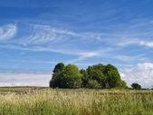 Krásné letní krajina — Stock fotografie