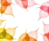 Bladen isolerad på vit bakgrund — Stockfoto