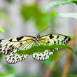 Yellow butterfly on a green leaf - 图库照片
