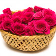 Magenta roses in basket — Stock Photo