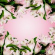 Border with many pink lily — Stock Photo