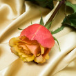 Pink rose on yellow silk — Stock Photo