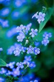 Niebieskie kwiaty w ogrodzie — Zdjęcie stockowe