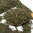Spice of thyme isolated - Stock Photo