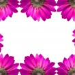 Frame of pink flowers isolated on white background - Стоковая фотография
