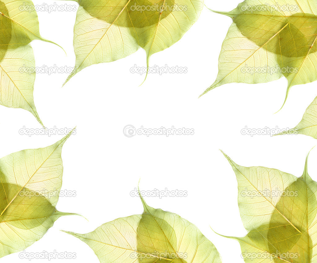 Leaves isolated on white background — Stock Photo #3605845