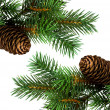 Branch of Christmas tree on white - Foto de Stock  