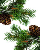 Tak van kerstboom op wit — Stockfoto
