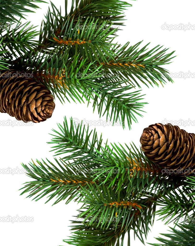 Branch of Christmas tree on white — Stock Photo #3897911