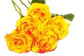 Yellow roses isolated on white background — Photo