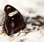 Beautiful brown butterfly on stone — Stock Photo