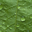 Leaf — Stock Photo #3163558
