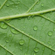 Leaf — Stock Photo #3163563