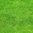 Green grass background — Foto Stock #3762000