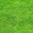 Green grass background — Stockfoto #3762000