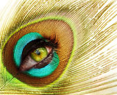 Peacock feather with green eye — Stock Photo