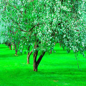 Blooming green Beautiful park garden in spring — Stock Photo