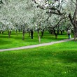 Blossoms on footpath through green forest - Stock Photo