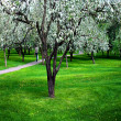 Blossoms on footpath through green forest — Stock Photo #3031936