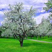 Floraison de printemps forêt — Photo