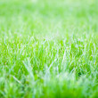 Stock Photo: Vivid spring green grass