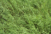Green grass . — Stock Photo