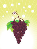 Grapes on the vine, wallpaper — Stock Vector