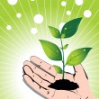 Growing green plant in a hand, vector — Stock Vector