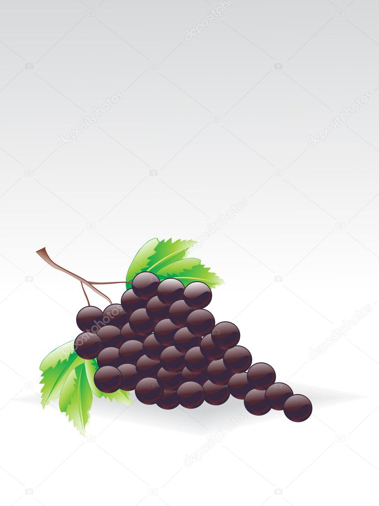 Grey background with cluster of grapes, vector illustration  Stock Vector #2839265