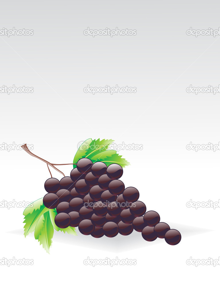 Grey background with cluster of grapes, vector illustration    #2839265