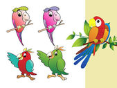 Collection de vecteur de perroquet — Vecteur