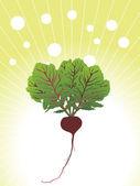 Organic beetroot close up illustration — Stock Vector
