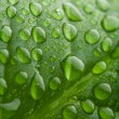 Fresh green leaf with water droplets — Stockfoto #3058719
