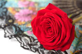 Red rose over fan isolated — Stock Photo
