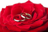 Golden wedding rings over red rose isolated — Stock Photo