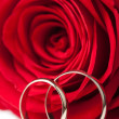 Foto Stock: Golden wedding rings and red rose isolated