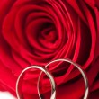 Golden wedding rings and red rose isolated — Stock Photo
